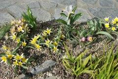 botanische tulpenweelde
