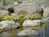 lente aan de vijver