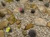 winterharde cactushoek (1)