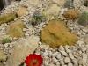 winterharde cactushoek (2)